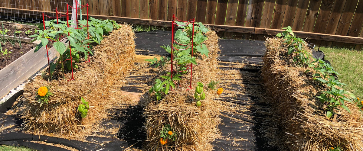 The Pros and Cons of Straw Bale Gardening